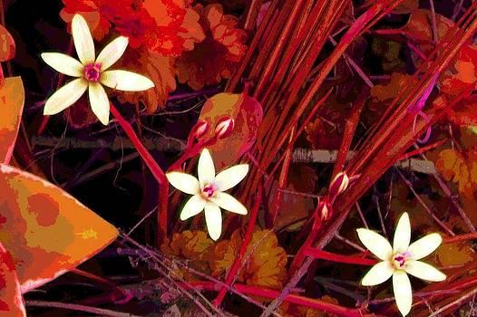 White Weeds by Mark Malitz