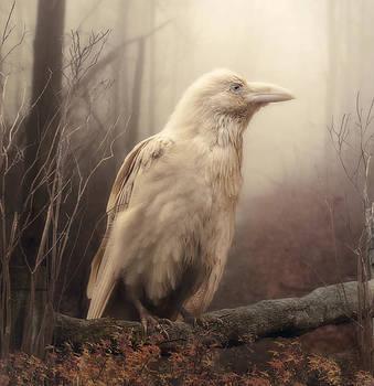 White Wild Raven by Cindy Grundsten