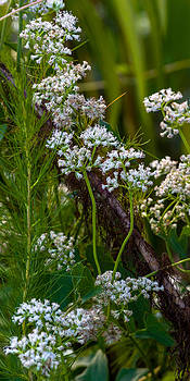 White Wildflowers on a Branch by Ed Gleichman