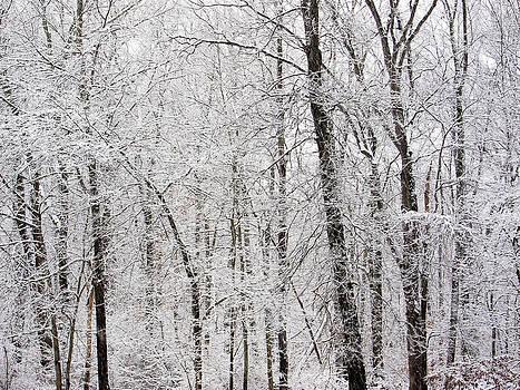 White Winter World by Nancy De Flon