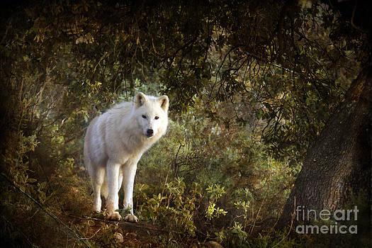 Angel Ciesniarska - white wolf
