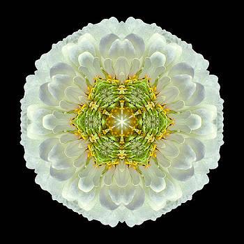 White Zinnia Elegans V Flower Mandala by David J Bookbinder