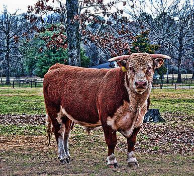 Joe Bledsoe - WhiteFace Bull No.2
