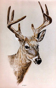 Whitetail Buck in Velvet by Gail Dolphin