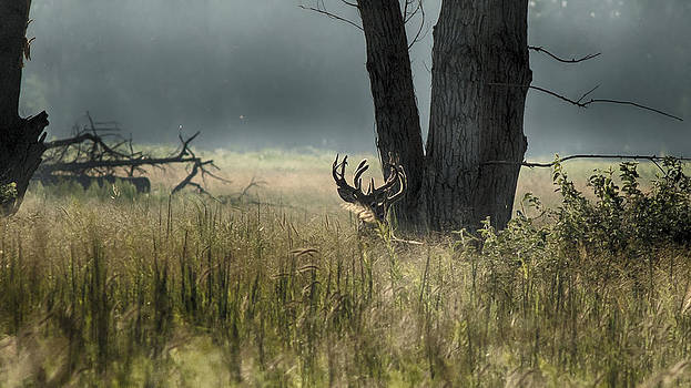 Whitetail Deer by Garett Gabriel
