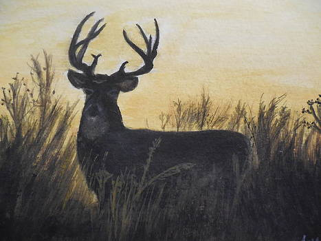 Whitetail deer by Tammy McClung