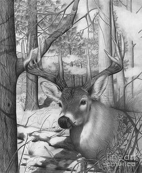 Whitetail Phantom by Barb Schacher