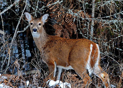 Whitetail Wonder by Annie Pflueger