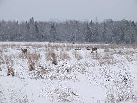 Whitetails in Snow by Gene Cyr