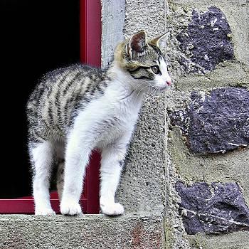 Nikolyn McDonald - Who Goes There - Kitten