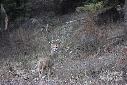 Who you lookin at  Buck by Linda Meyer