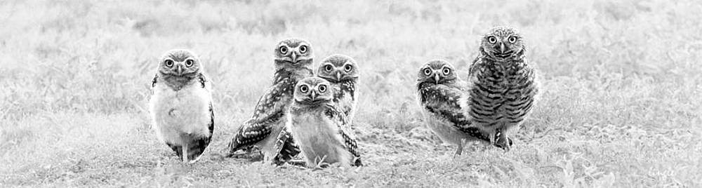 Whoo...are you? by Brian Lingle