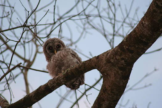 Whoooo are You by Anita Parker