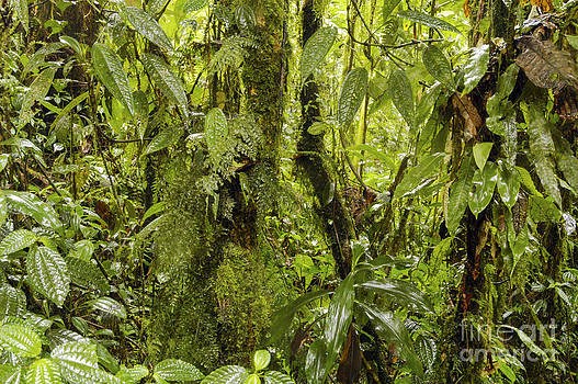 Bob Phillips - Why it is called the Rainforest