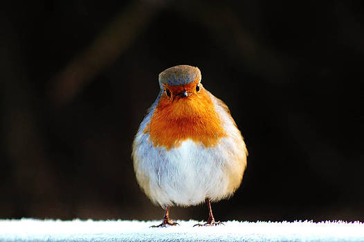 Why the long face Robin. by Catherine Davies