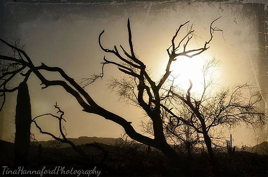 Wicked sunset by Tina Hannaford