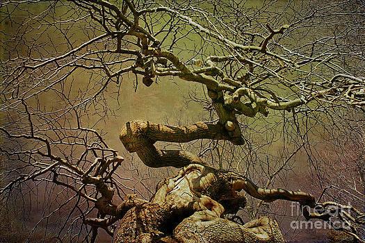 Cindi Ressler - Wicked Tree