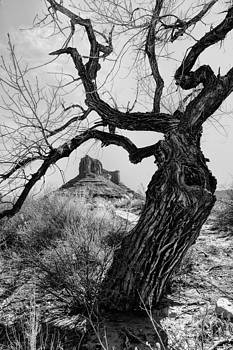 Wicked Tree by Jeff R Clow