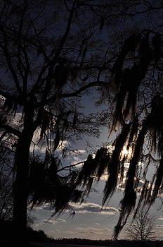 Wicked Tree by Mischelle Lorenzen