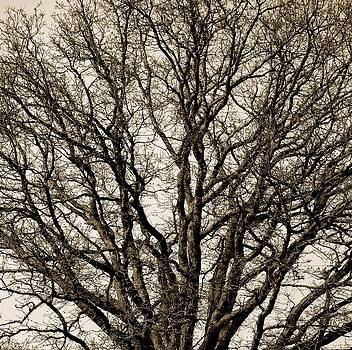 Sherlyn Morefield Gregg - Wicked Tree