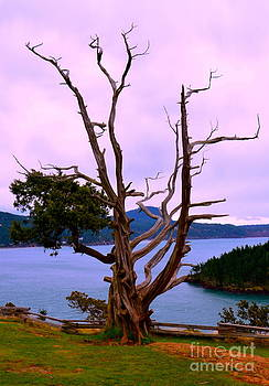 Wicked tree by Tina Hannaford