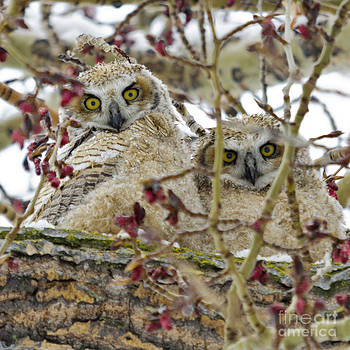 Wide-Eyed Wonders by Dee Cresswell