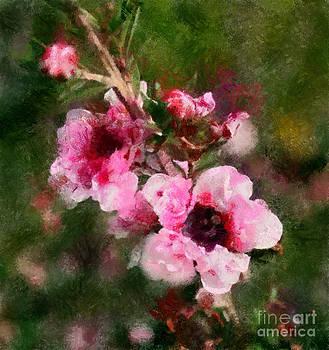 Scott B Bennett - Wikd Flowers