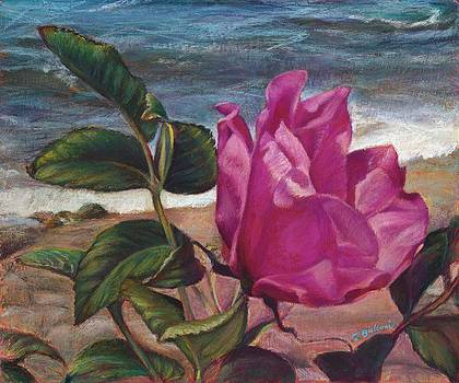 Wild Beach Rose by Laura Balboni Craciun