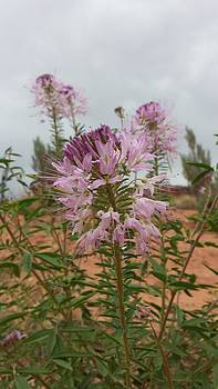 Wild Bee Balm by Justyne Moore