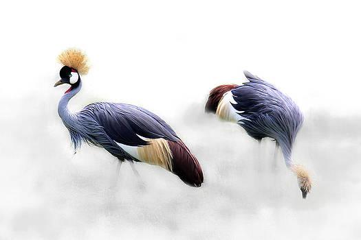 Wild Birds by Christine Sponchia