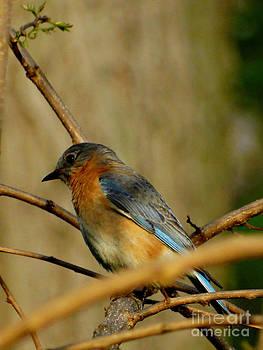 Scott B Bennett - Wild Birds lll