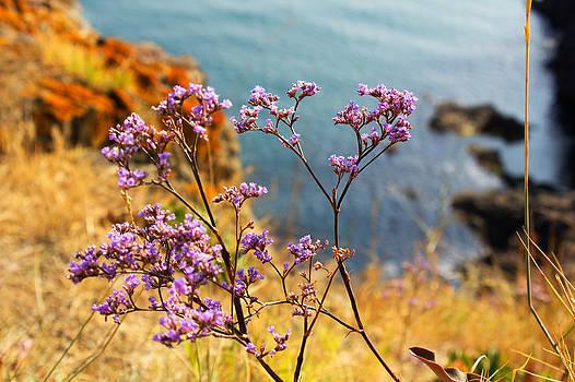 Wild bouquet by Martin Hristov