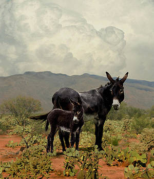 Wild Burros of Tucson by M Spadecaller