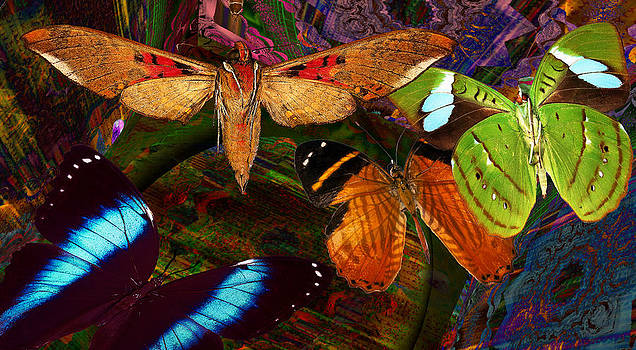 Wild Butterflies by Joseph Mosley