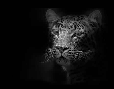 Wild Cat by Lori Hutchison