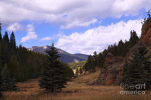 Wild Colorado by Barbara Schultheis