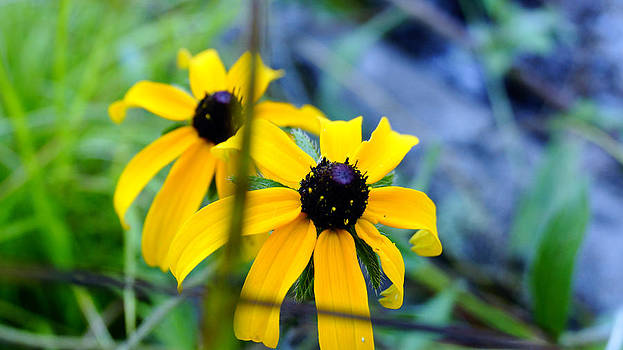 Wild flower 2 by Douglas Hamilton