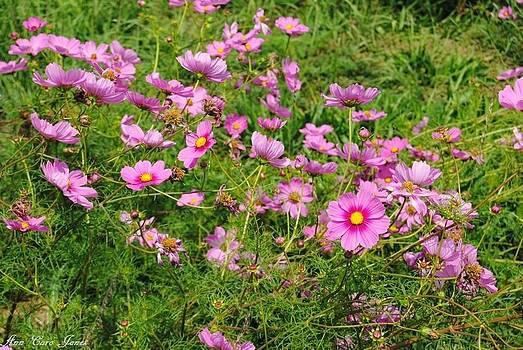 Wild flower by Anna Liza Jones