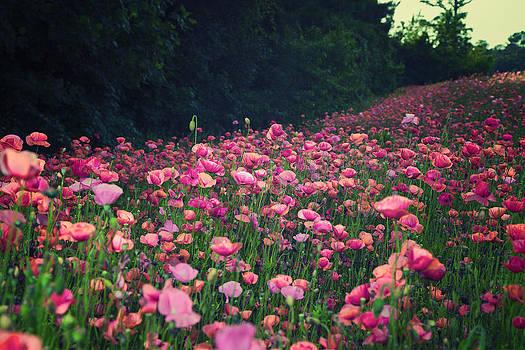 Wild Flower Breeze by Chris Brehmer Photography