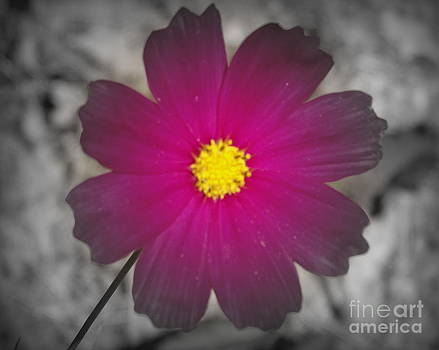 Shawna Gibson - Wild flower