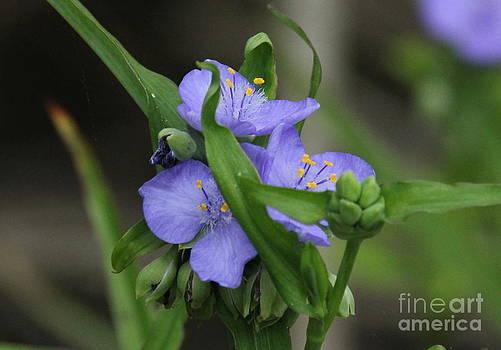 Wild Flower by Vicki Genna