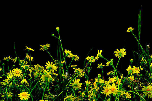 Wild Flowers at Night by Marwan Khoury
