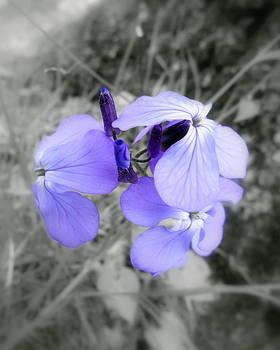 Ioanna Papanikolaou - wild flowers