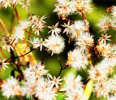 Wild flowers by Martin Hristov