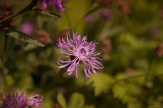 Miguel Winterpacht - Wild Flowers
