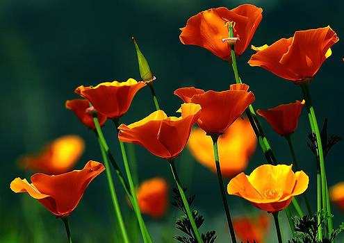 Wild Flowers by Ricardo Machado