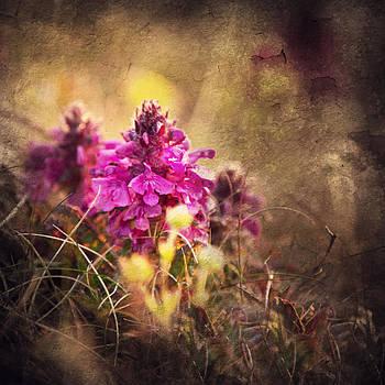 Wild Flowers by Toma Bonciu
