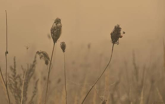 Wild Fog by Paula Sharlea