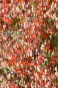 Minartesia - Wild Foliage