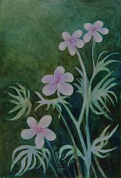 Wild Geranium by Anne Havard